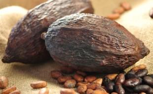 Kakaofrchte , Kakaobohnen