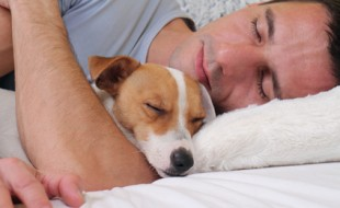 Sleeping dog and owner. Man and dog sleeping together