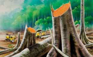 Regenwaldrodung